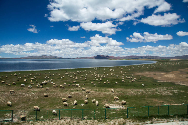 Lhasa train view Qinghai grasslands