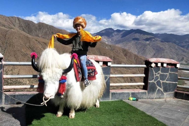 Touring in Tibet with Yak