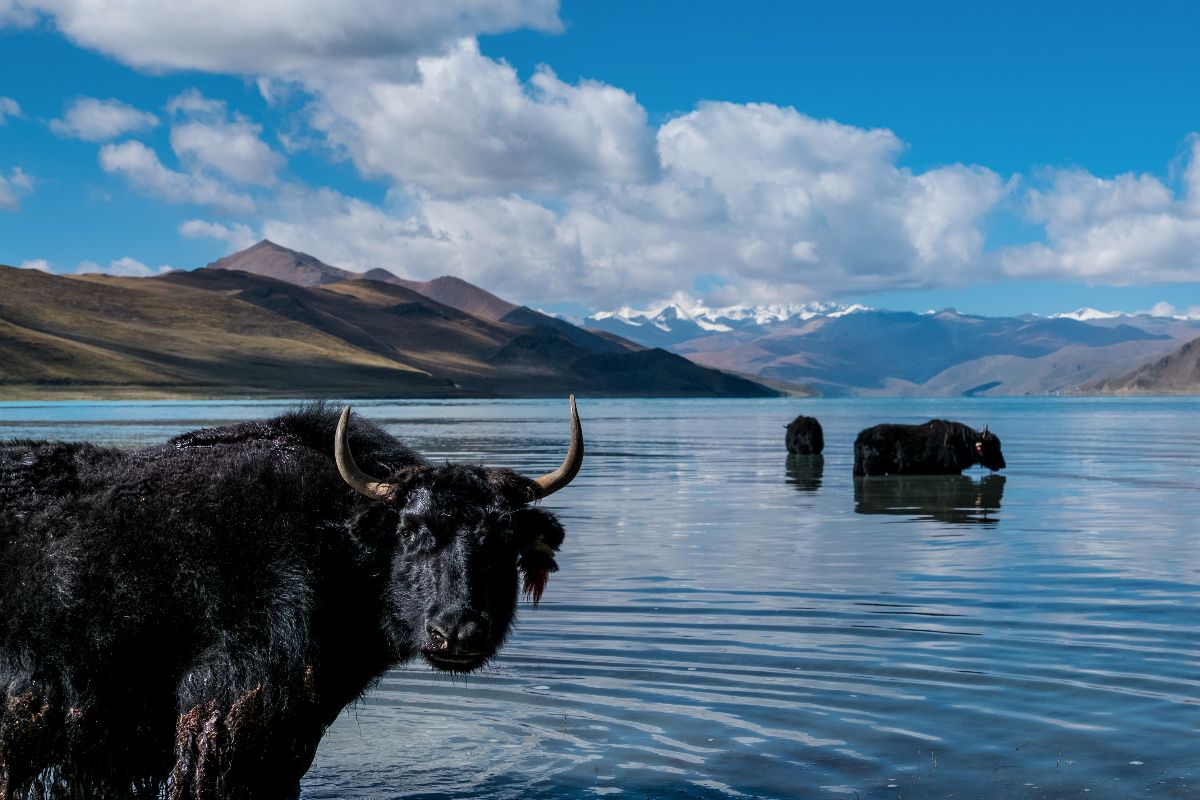 You are currently viewing Top 5 Alpine Lakes to Visit in Tibet